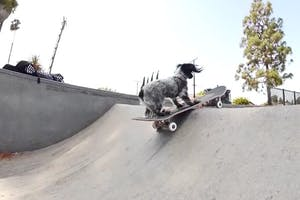 Murdy the Dawg — Full Part