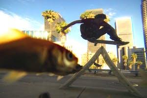 Fisheye: Russell Houghten