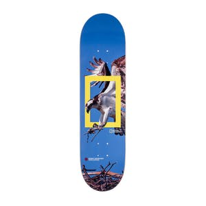 "Element x Nat Geo Osprey 8.25"" Skateboard Deck"