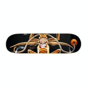 "Powell-Peralta Marion Moth 8.25"" Skateboard Deck"